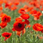 We Remembered The Fallen – 12th November