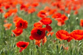 Remembrance Sunday Service – 10th November