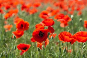 Remembrance Sunday Service – 11th November